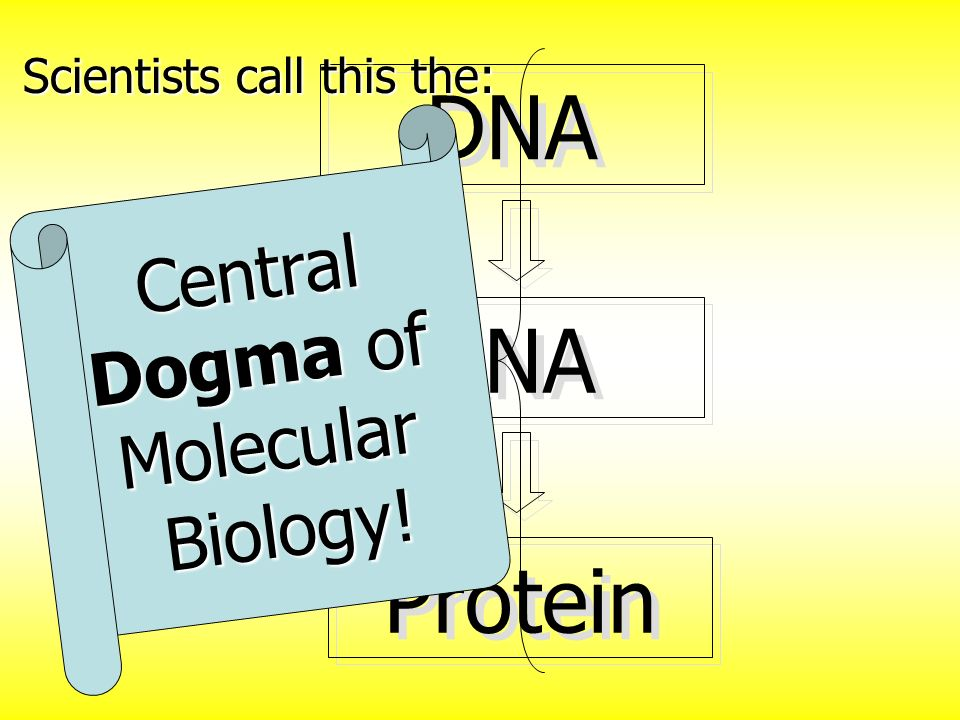 Central Dogma of Molecular Biology!