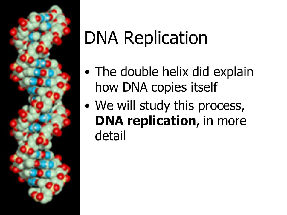 DNA Replication The double helix did explain how DNA copies itself
