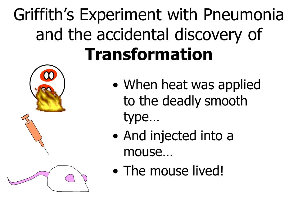 Griffith's Experiment with Pneumonia and the accidental discovery of Transformation