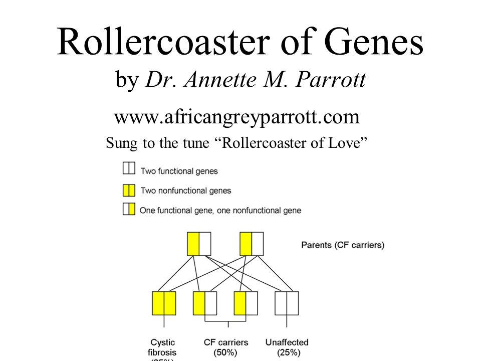 Rollercoaster of Genes by Dr. Annette M. Parrott