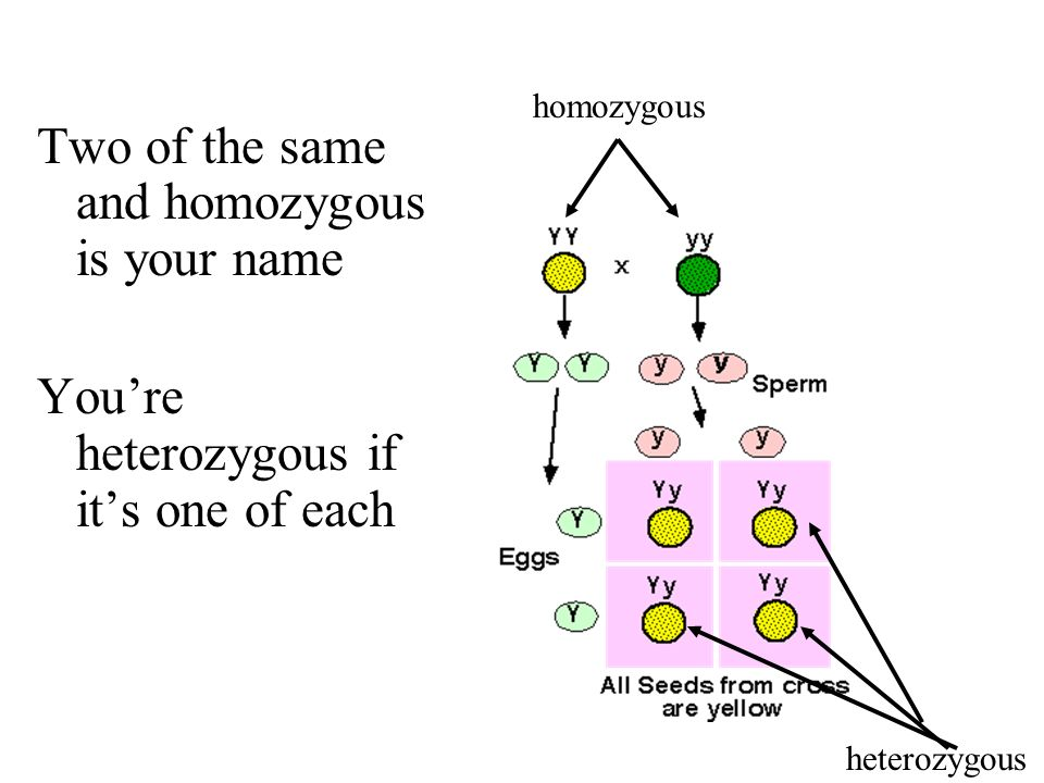 Two of the same and homozygous is your name