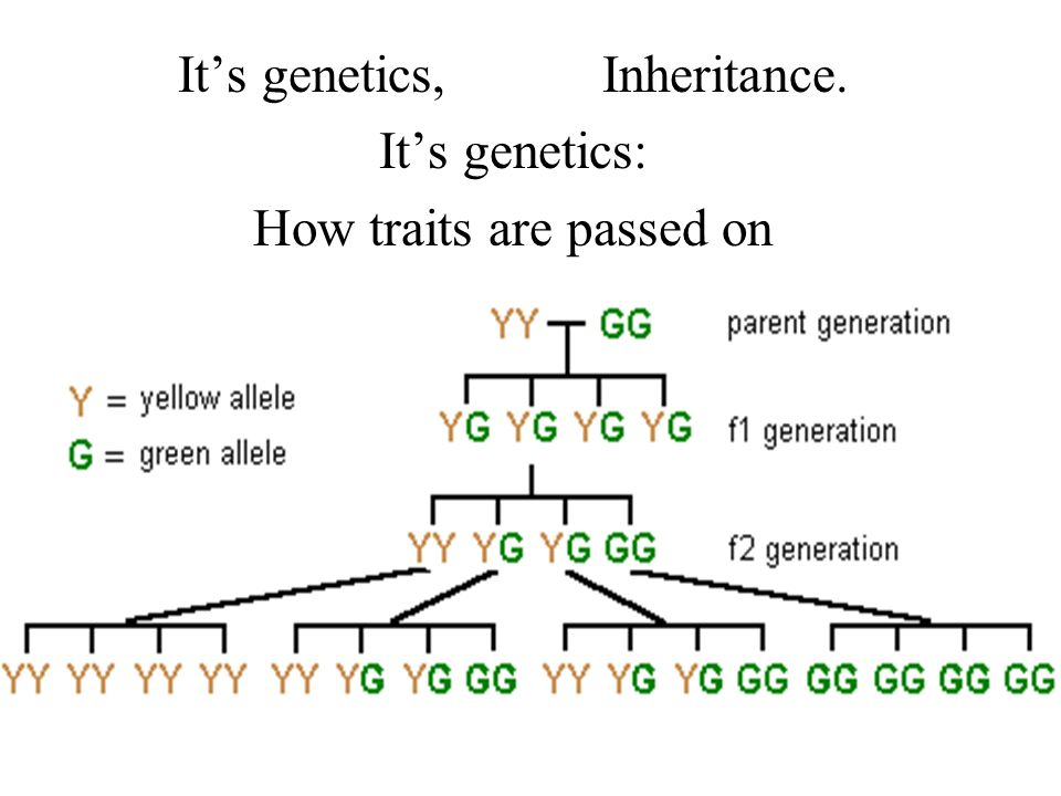 It's genetics, Inheritance. It's genetics: How traits are passed on