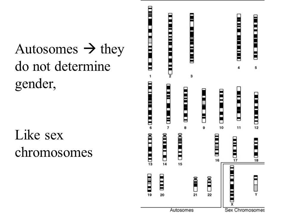 Autosomes  they do not determine gender,