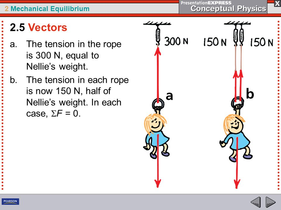 2.5 Vectors The tension in the rope is 300 N, equal to Nellie's weight.
