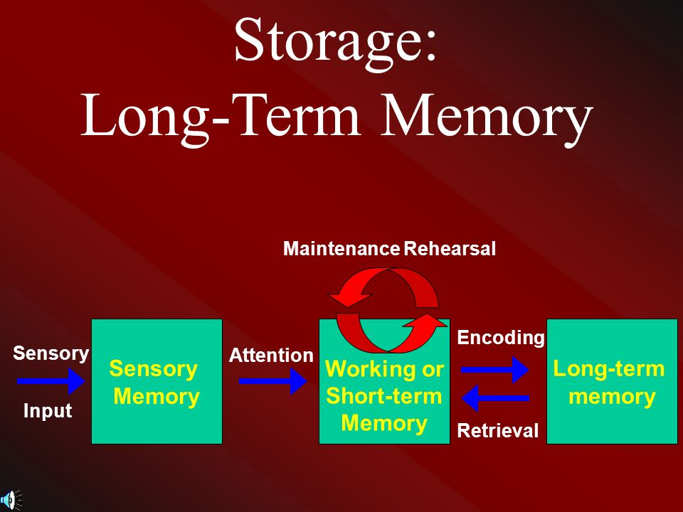 encoding and memory recall essay Was designed to investigate the effect of colour on memory recall  processes  are of critical importance encoding, storage and retrieval.