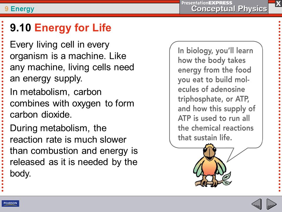 9.10 Energy for Life Every living cell in every organism is a machine. Like any machine, living cells need an energy supply.