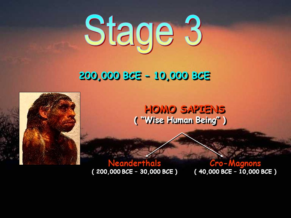 Stage 3 200,000 BCE – 10,000 BCE. HOMO SAPIENS ( Wise Human Being ) Neanderthals ( 200,000 BCE – 30,000 BCE )