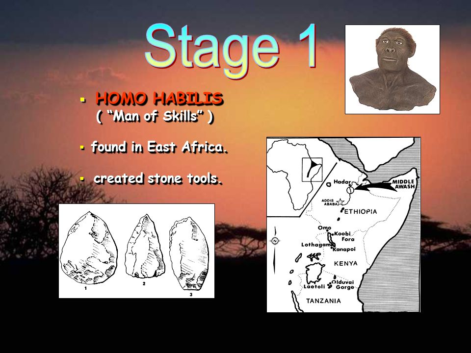 Stage 1 HOMO HABILIS ( Man of Skills ) found in East Africa.