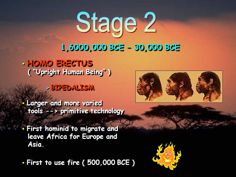 Stage 2 1,6000,000 BCE – 30,000 BCE. HOMO ERECTUS ( Upright Human Being ) BIPEDALISM.