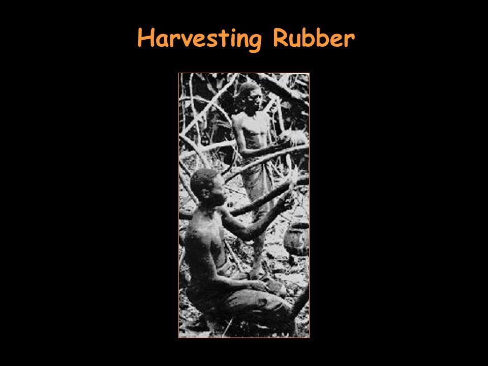 Harvesting Rubber