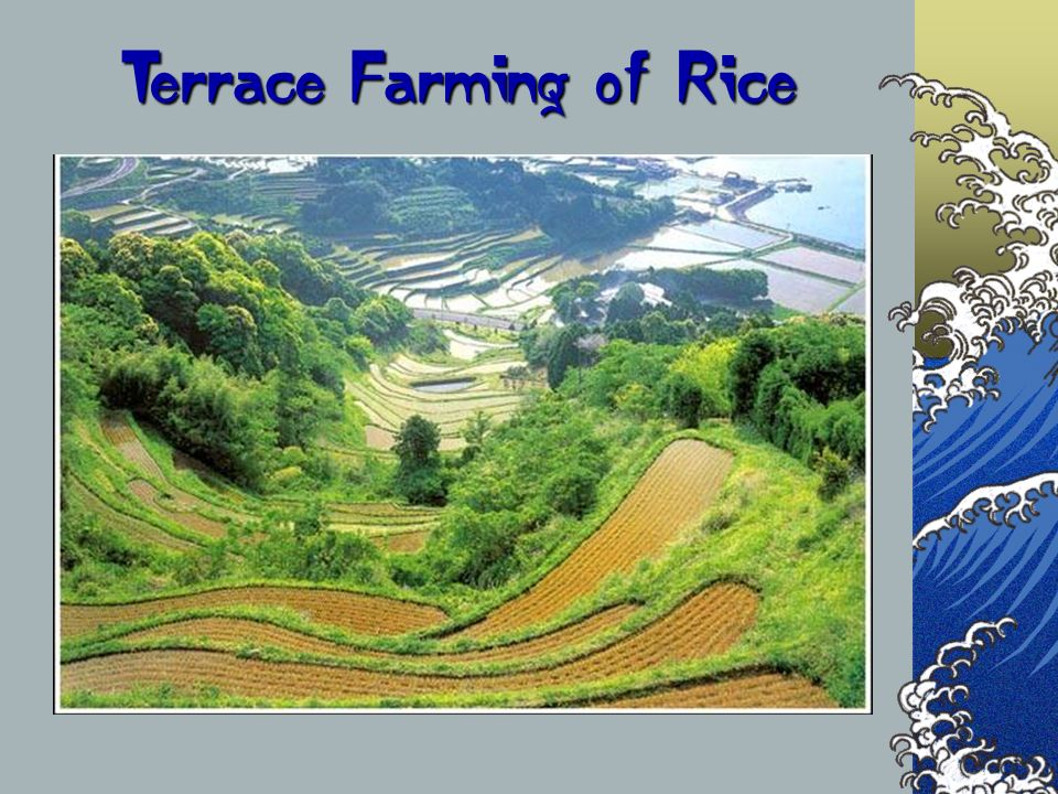 Terrace Farming of Rice