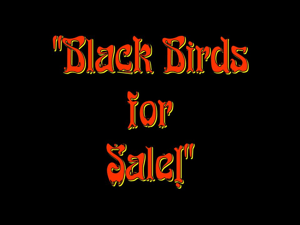 Black Birds for Sale!