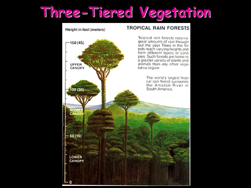 Three-Tiered Vegetation