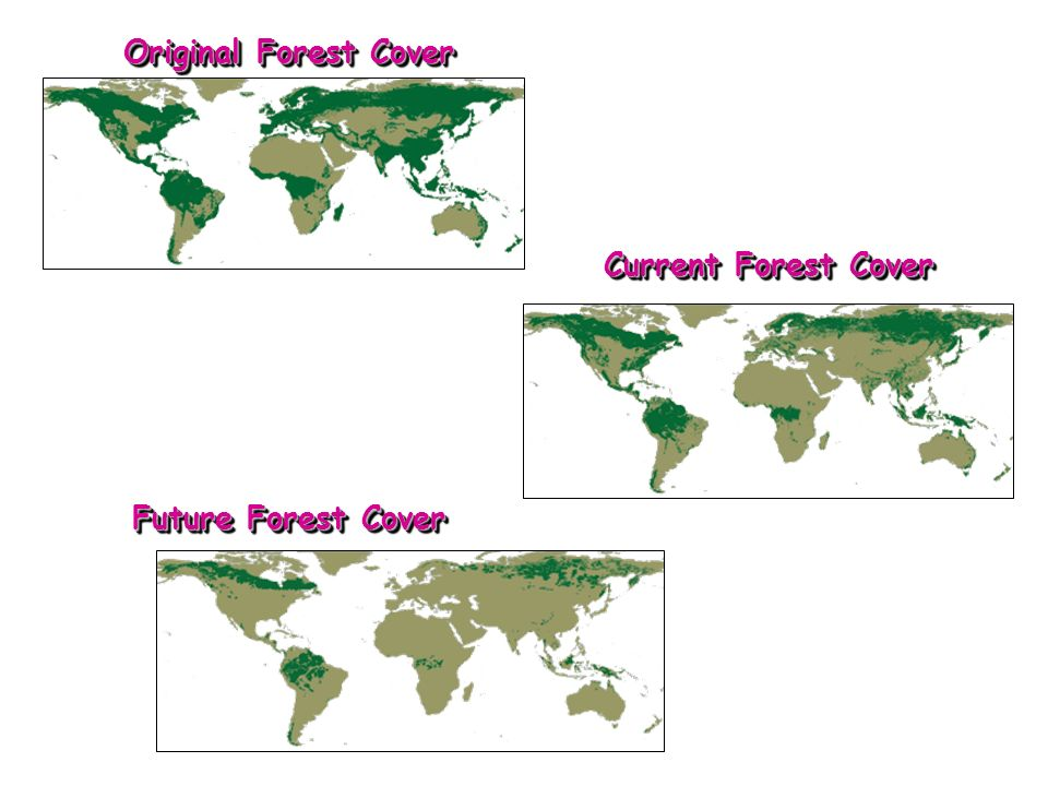 Original Forest Cover Current Forest Cover Future Forest Cover