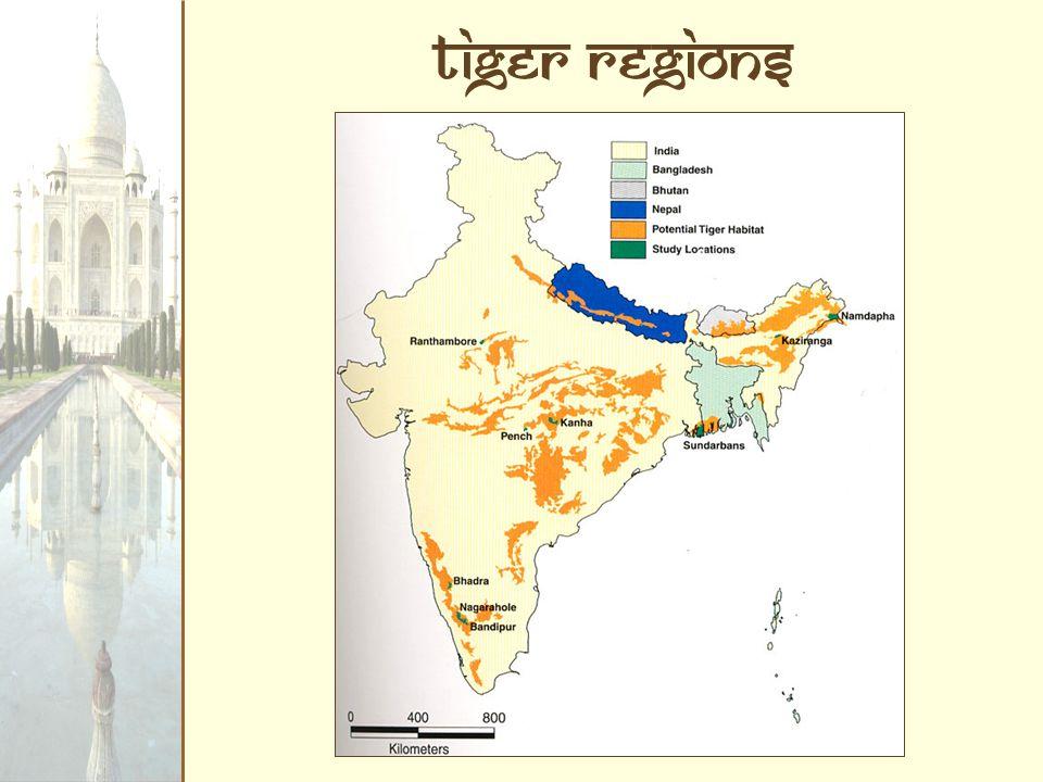 Tiger regions
