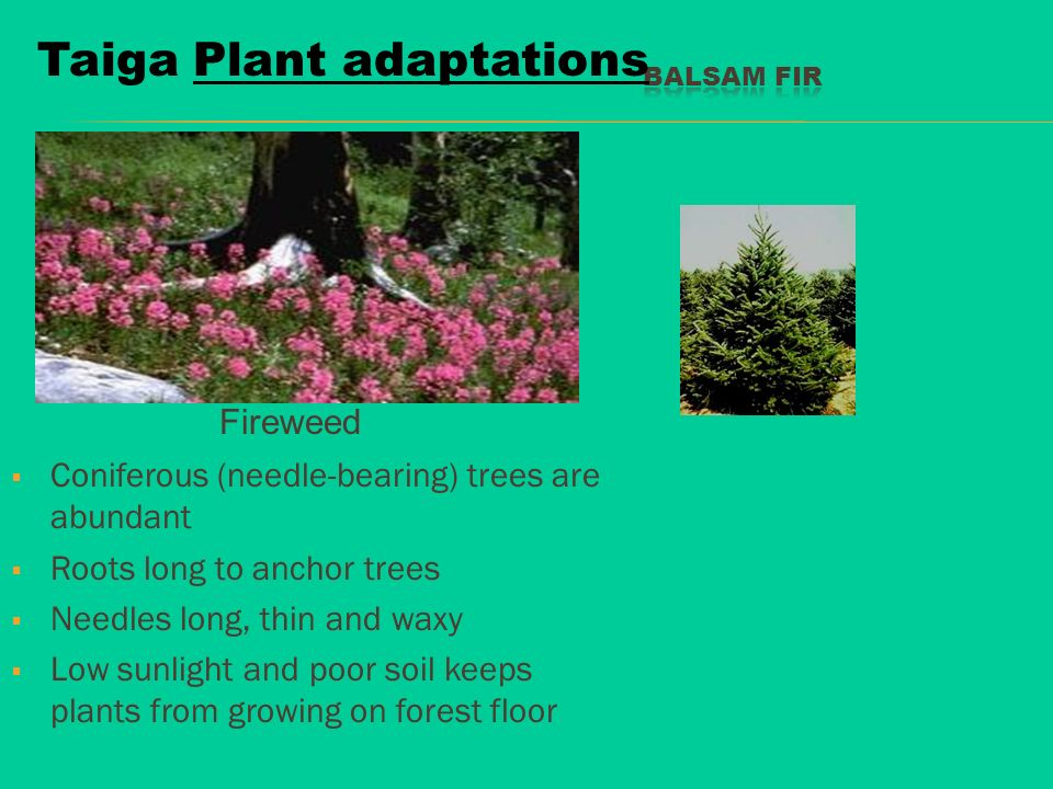 World Biomes Ppt Download