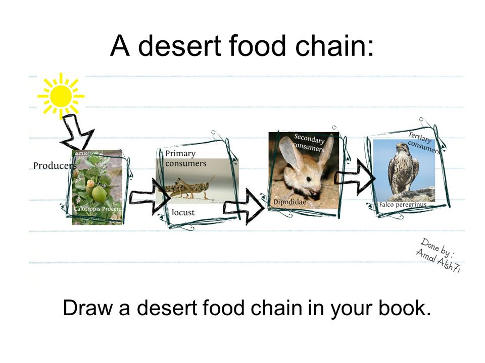 How are these animals and plants linked? - ppt video ...