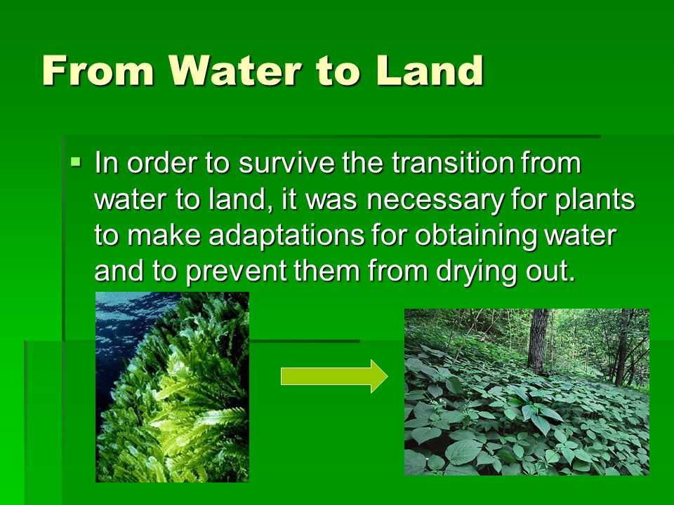 from water to land Look into whether you'll be able to tap into a public water supply or a community well before you finalize your land purchase.