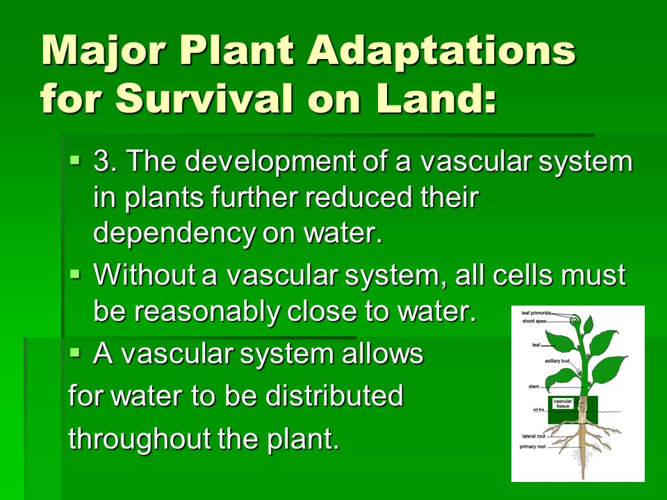 Major Plant Adaptations for Survival on Land: