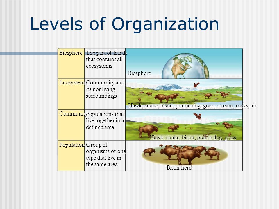 Ecology Levels Of Organization Worksheet Related Keywords And Tags