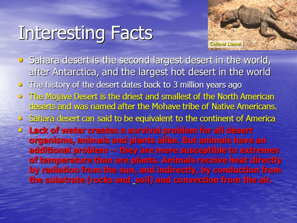 Cassie Jasmine Ecology Ppt Video Online Download - What is the largest desert in the world
