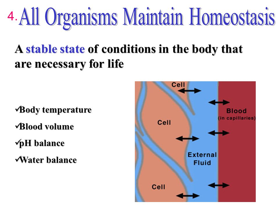 maintaining dynamic homeostasis Dynamic 2a) experiences physiological variable functions 2b) does not remain constant 2c) balance does not mean unchanging: term in order to maintain homeostasis.