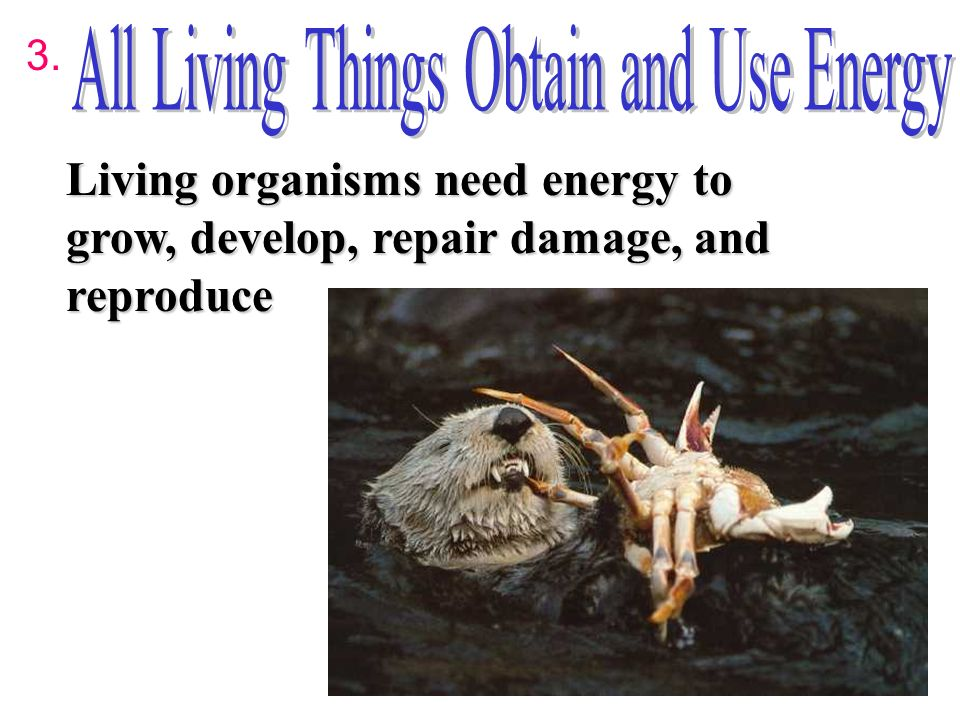 Living Things Obtain And Use Energy