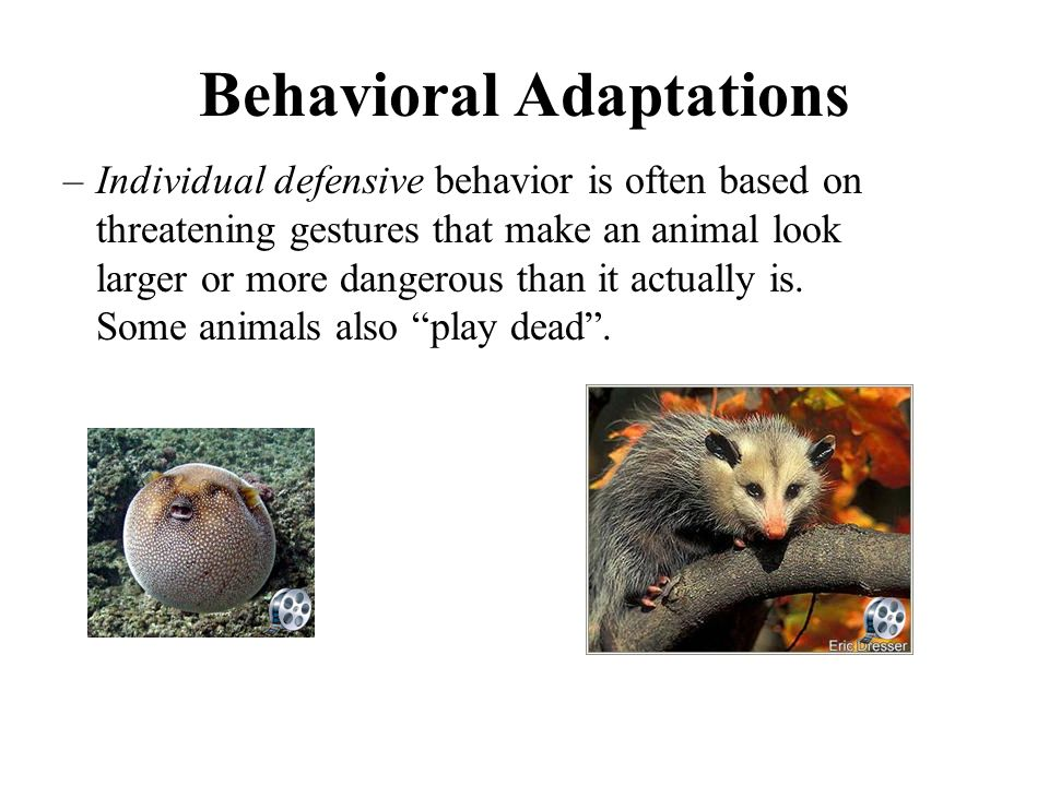 Children's Ideas About Animal Adaptations: An Action ...