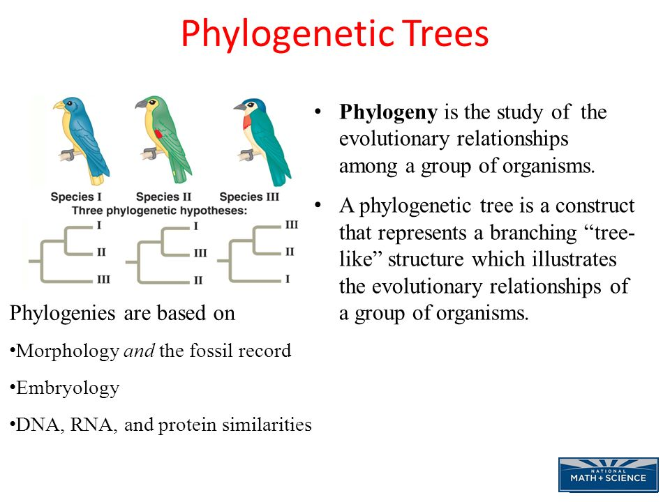 Evolutionary Biology Questions and Study Guide | Quizlet ...