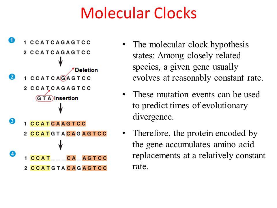 Molecular Clock Worksheet - molecular clock worksheet ...
