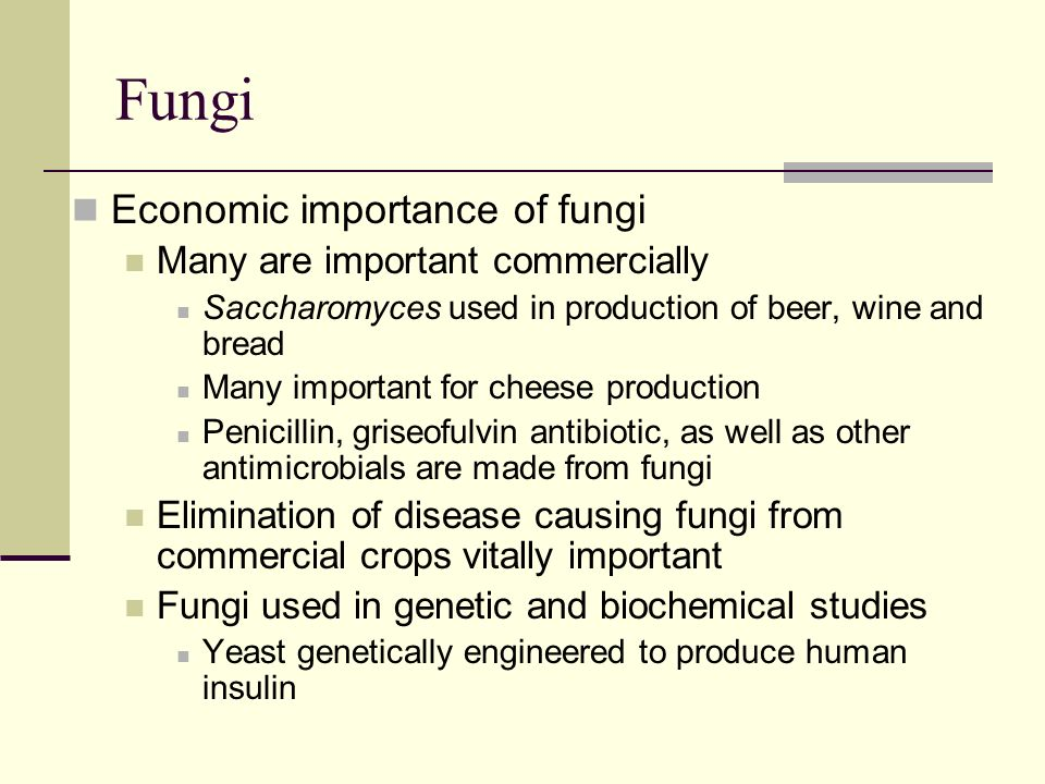 the importance of fungi Almost 500 international experts have worked together to develop a ranking  system of the ten most important phytopathogenic fungi on a.