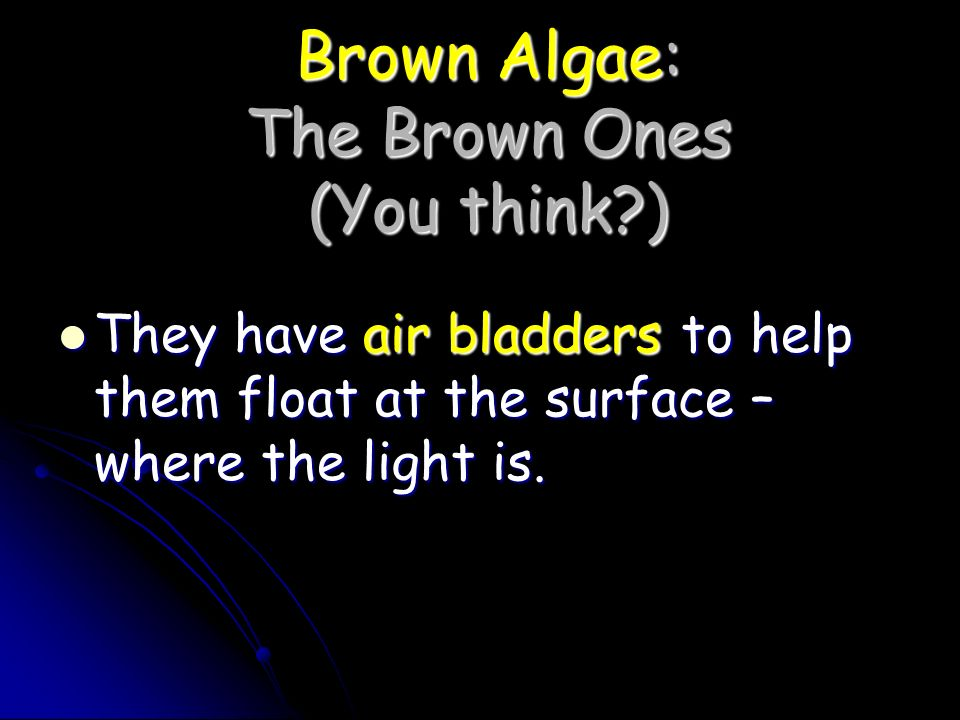 Brown Algae: The Brown Ones (You think )