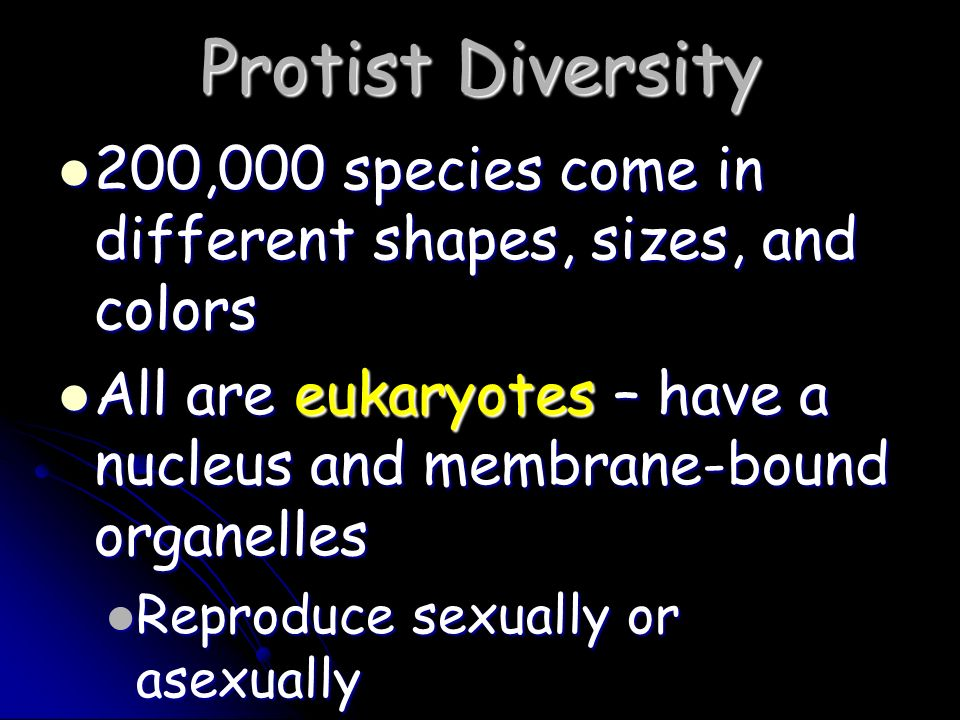 Protist Diversity 200,000 species come in different shapes, sizes, and colors. All are eukaryotes – have a nucleus and membrane-bound organelles.
