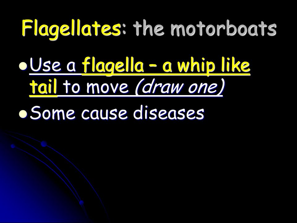 Flagellates: the motorboats