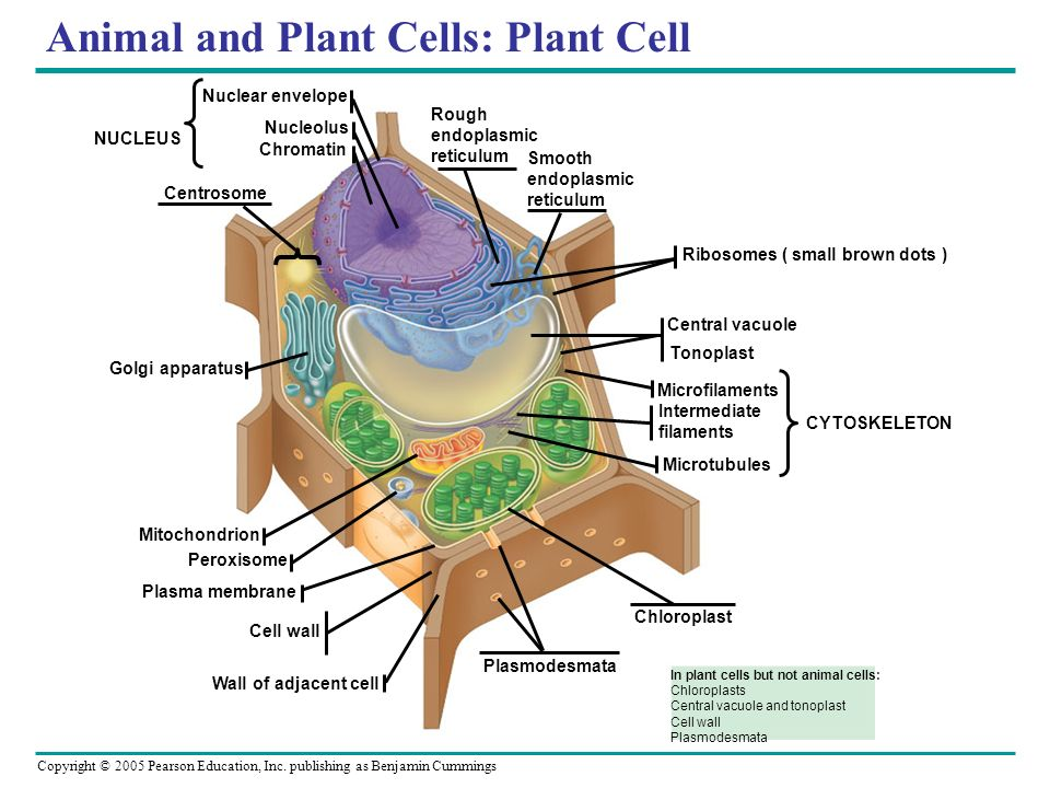 Chapter 6 A Tour of the Cell. - ppt video online download