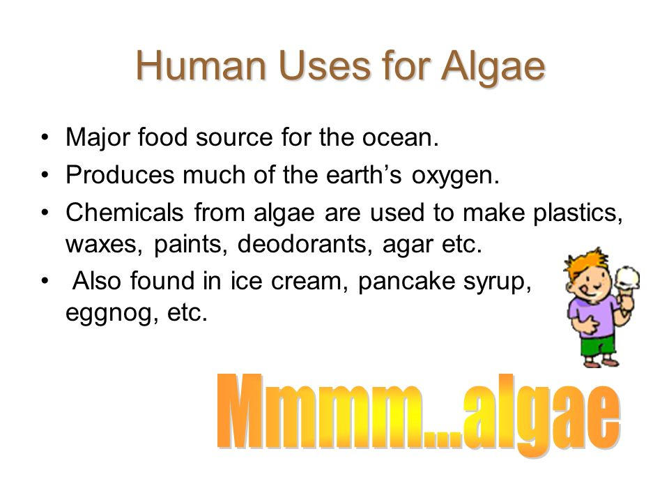 Human Uses for Algae Mmmm...algae Major food source for the ocean.