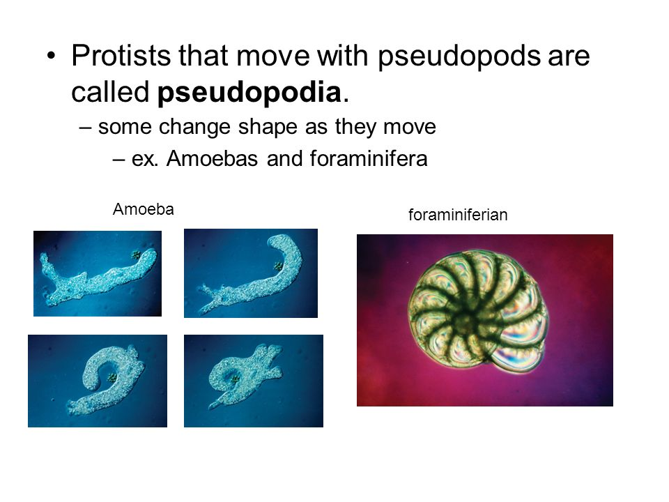 Protists that move with pseudopods are called pseudopodia.