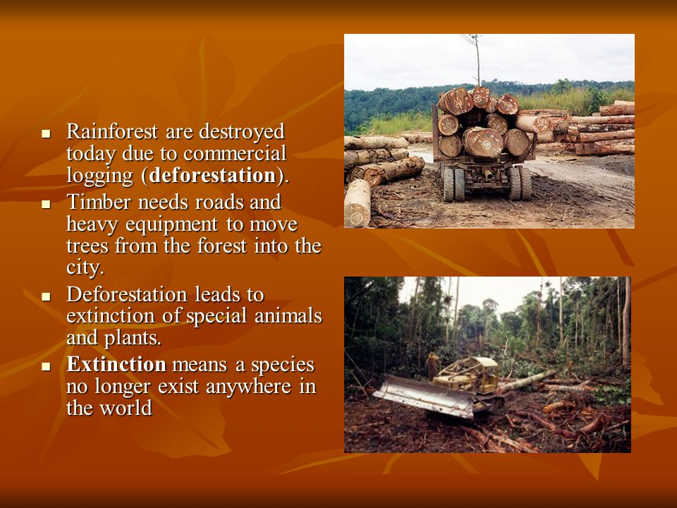 Rainforest are destroyed today due to commercial logging (deforestation).