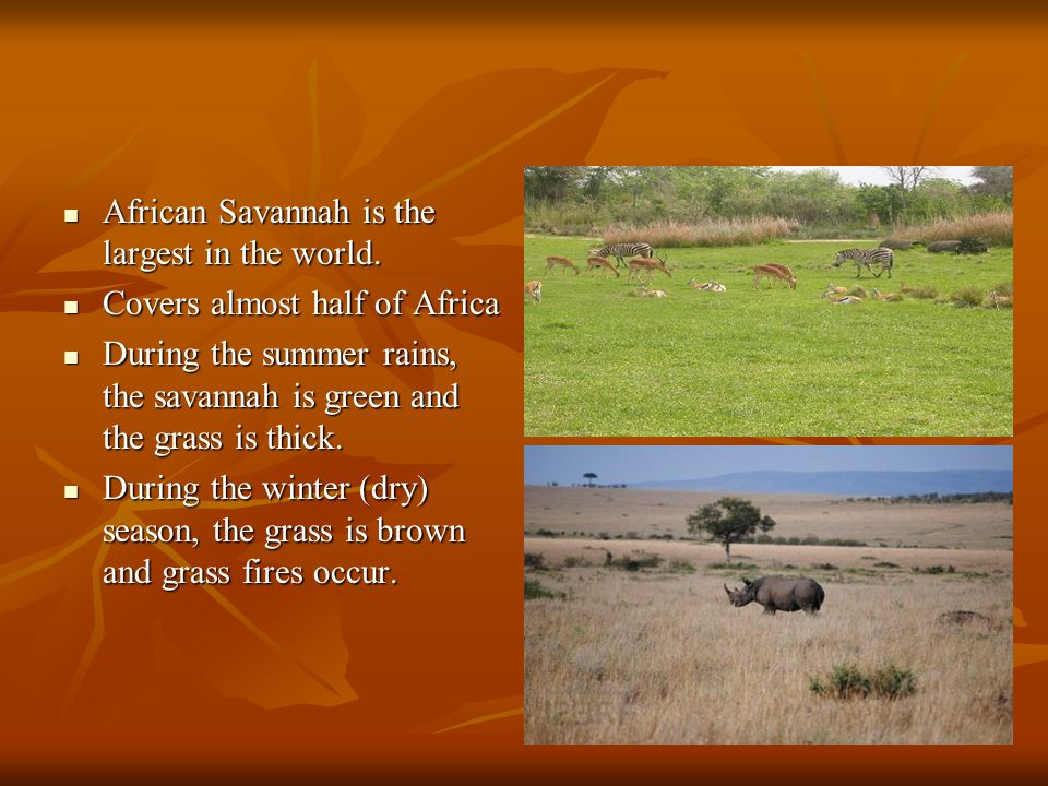 African Savannah is the largest in the world.