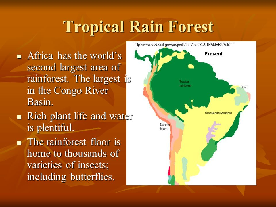 Tropical Rain Forest Africa has the world's second largest area of rainforest. The largest is in the Congo River Basin.