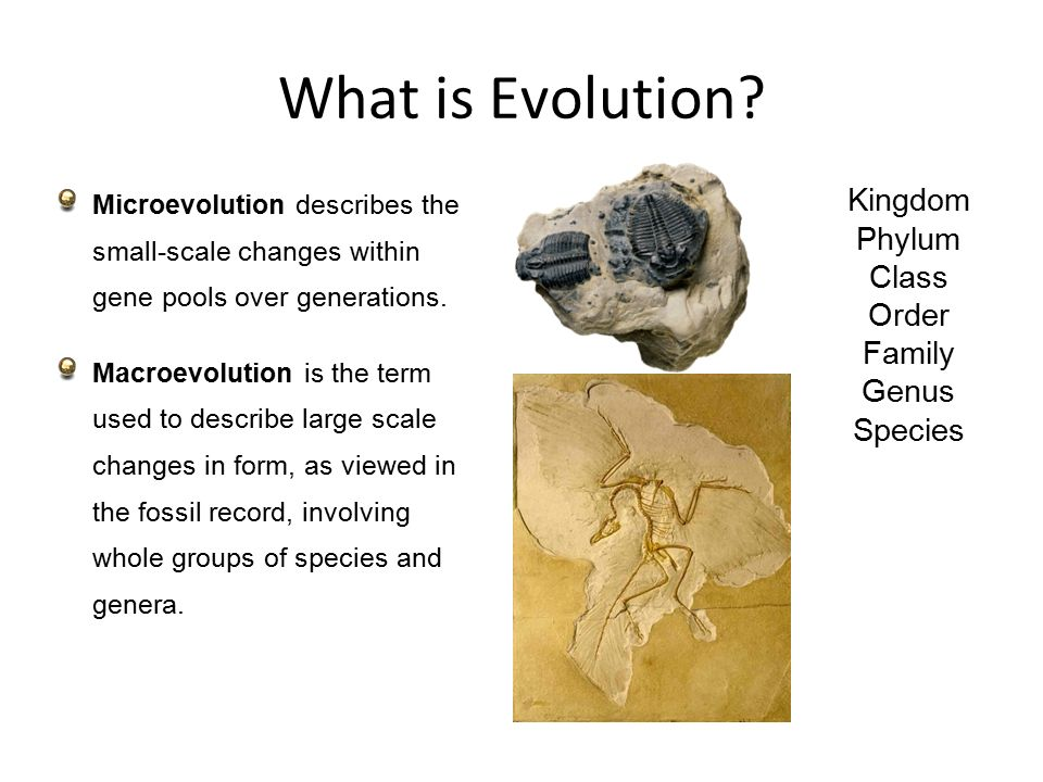 the history and evolution of class in the united kingdom The united kingdom comprises four geographic and historical parts—england, scotland, wales, and northern ireland the united kingdom contains most of the area and population of the british isles—the geographic term for the group of islands that includes great britain, ireland, and many smaller islands.