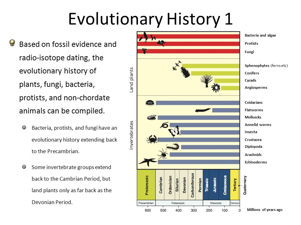 evolutionary history of animal Fascinating animals our amazing and fascinating animal kingdom 09 jan 2013 1 comment cladograms & evolution - we are all related (taxonomy) represented a rough approximation of evolutionary history.