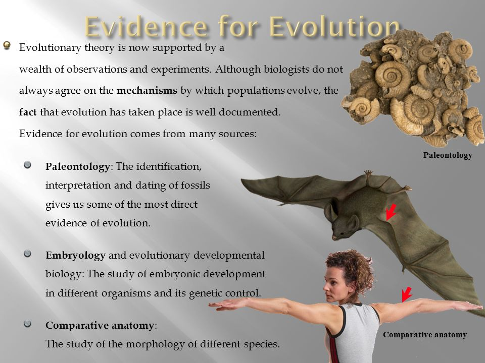 a history of the general theory of evolution and the study of paleontology Most people think of evolution as relating to biology and paleontology  and study past environments darwin's theory of  in the theory of evolution.