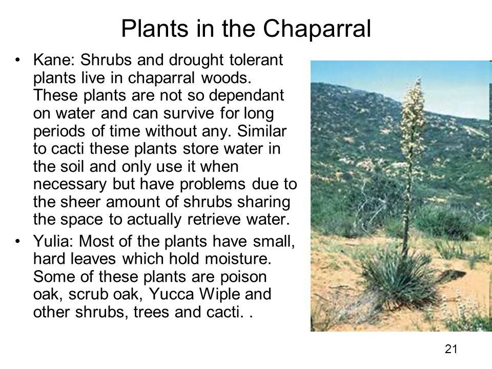 Y8 how do plants and animals adapt to their biomes ppt for Plants that live long