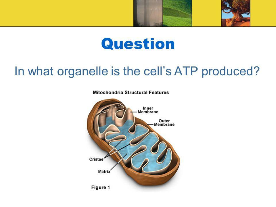 biology cells organelles
