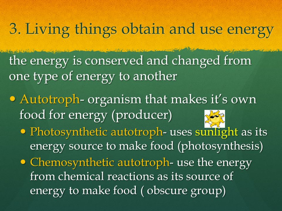 chemosynthetic autotrophs