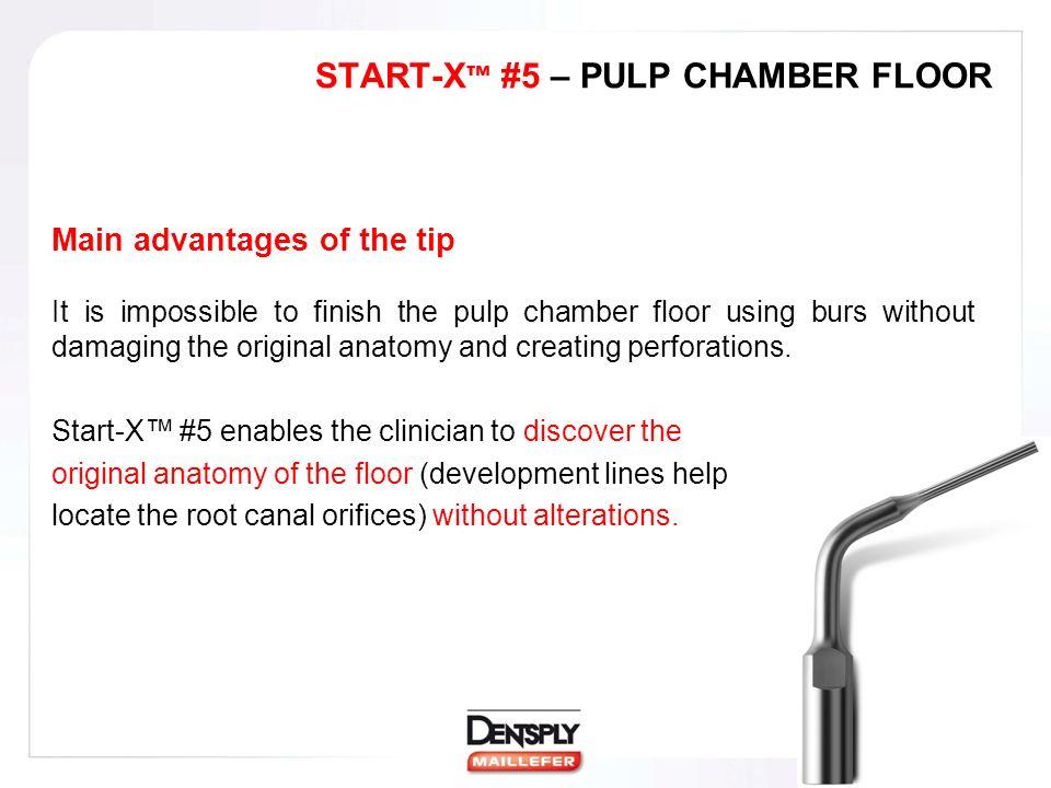 Fantastisch Anatomy Of The Pulp Chamber Floor Bilder - Menschliche ...