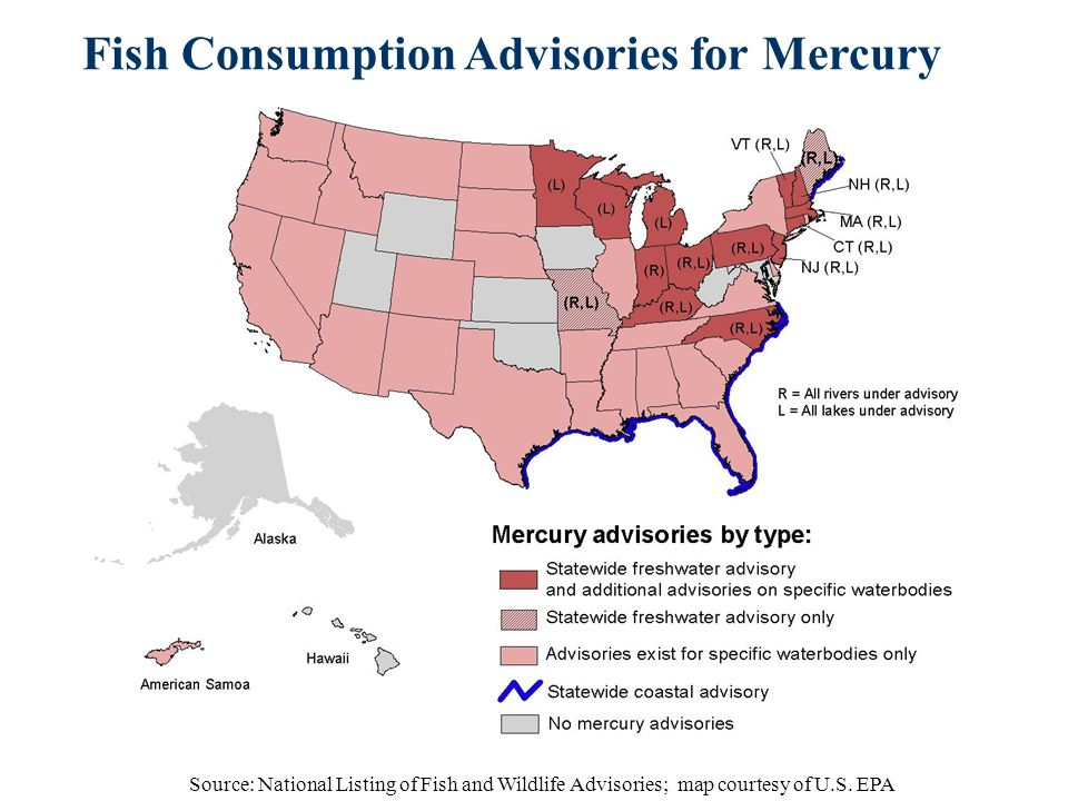 mercury in fish and fish consumption Fish caught in florida march 2018 fish consumption advisories are published periodically by the  fish from florida waters (based on mercury levels) page 51-52.