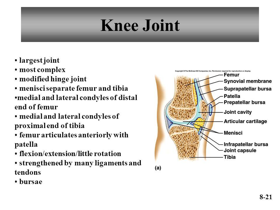 Joints of the Skeletal System - ppt video online download Hinge Joint Knee