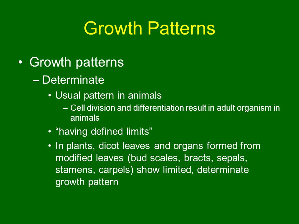 Growth Patterns Growth Patterns Determinate Usual Pattern In Animals